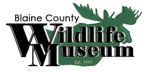 Blaine County Wildlife Museum